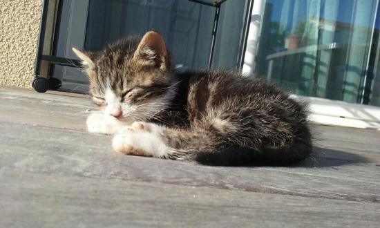 moustik male né  le 16/04, petit gabarit, très calin, n'a peur de rien