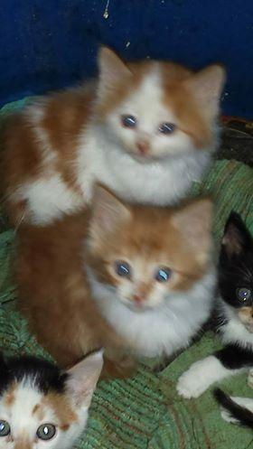 ouno male (adopté) et femelle (adoptée)  nés le 18 avril