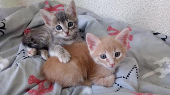 pacha pachie  nés le 2 avril male et femelle adopté