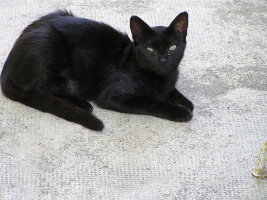 caline 2 ans, a adopté avec grisette si possible