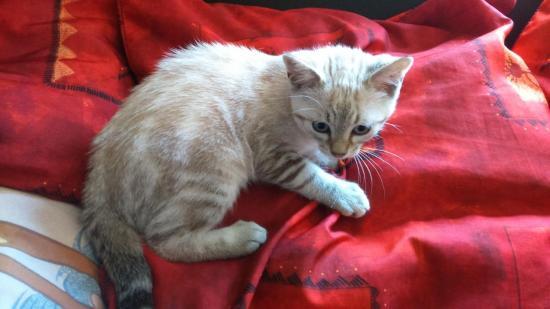 milord né le 15 avril  male, très calin yeux bleu