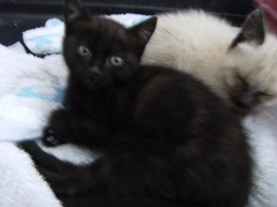 jasmine  adopté avec son frère