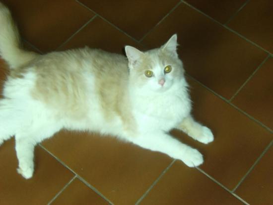 marshall né le 01/06/14, doux ok chats calin