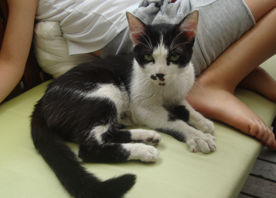 lynx  6/8 mois, photo à son arrivé, Adopté