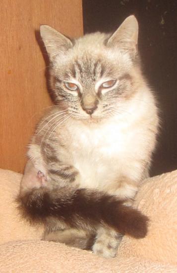 mitsumi né le 01/07/16 petit gabarit, amputé patte arrière