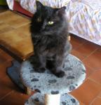 mizaru, né le 22/01/2011 calin, extérieur obligatoire