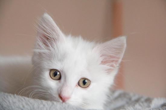 oyana, née le 03/07/18 en accueil sur castanet