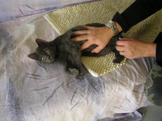 magiko né le 20/08/16 très calin, gris