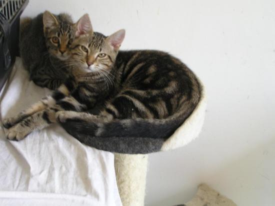 néman calin né le 08/04/17 sur l'arbre à chat