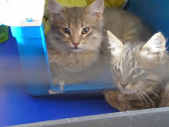 nora et norou 4 mois male et femelle