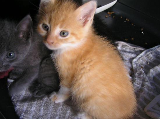 niagaro male 2 mois adopté