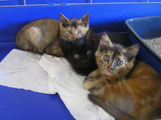 nadilia femelles née le 01/09/17 noir adopté