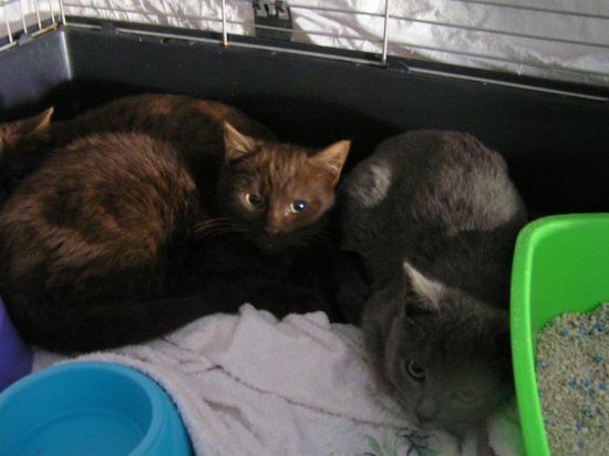ondine à gauche (adoptée) et ondina (grise) nées le 20/08/17