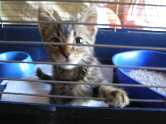 pirouette née le 01/11/18; adoptée