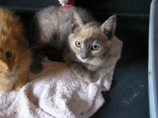 pila née le 15/04/19 timide, adopté